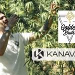 WIRTSCHAFT: Nach Kanavape bringt der CBD-Pionier das Premiumprodukt Goldenbuds auf den Markt