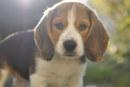 SOCIEDAD: Un perro masacrado por su amo por masticar su cigarrillo electrónico ...