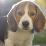 ΚΟΙΝΩΝΙΑ: Ένας σκύλος σφαγιάστηκε από τον αφέντη του για να μασά το ηλεκτρονικό τσιγάρο του ...