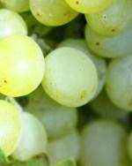 Grape Flavour E-Liquid Juice