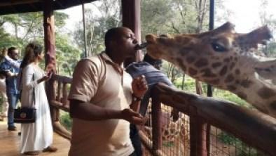 At giraffe centre