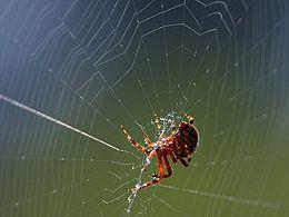Edderkoppene kommer!