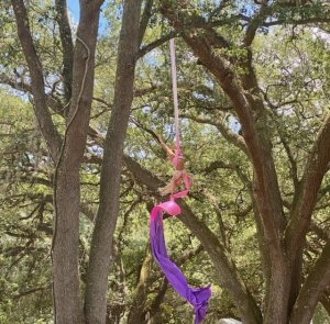 Female airel artist hands upside down from a pink and purple silk hung high in the tree tops