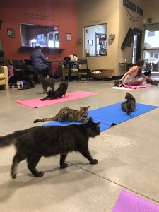 A roomful of cats and yoga mats