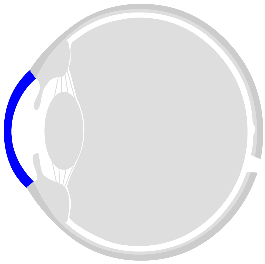 hight resolution of the front side of the eye is the cornea the cornea is transparent and consists of six layers the ring shaped transition from the cornea to the sclera is