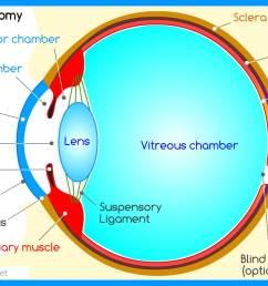 human eye diagram pdf wiring diagram expert human eye anatomy structure and function human eye [ 1598 x 952 Pixel ]