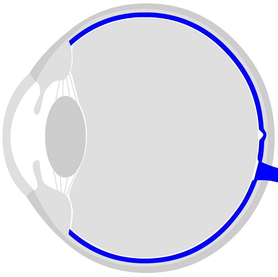 medium resolution of human eye diagram pdf electrical wiring diagram human eye anatomy structure and functionthe retina is