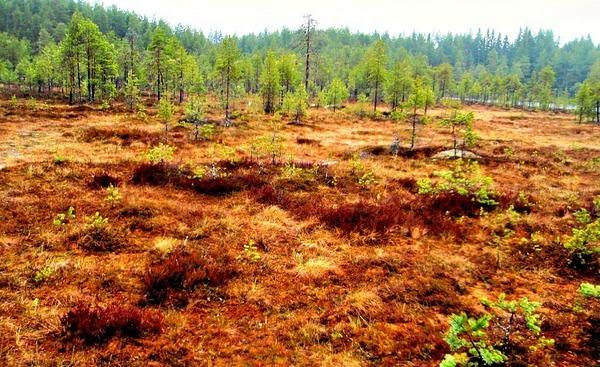Etusivun kuva on Seitsemisen luonnonpuistosta. Kuva Cai Melakoski.