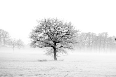 Snowy tree infrared heating image panel