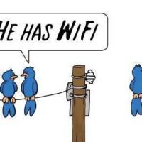 Twitter e l'uccellino WiFi