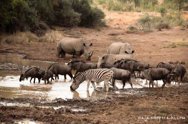 safari-sudafrica-20