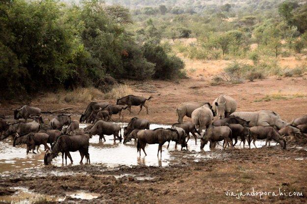 safari-sudafrica-22