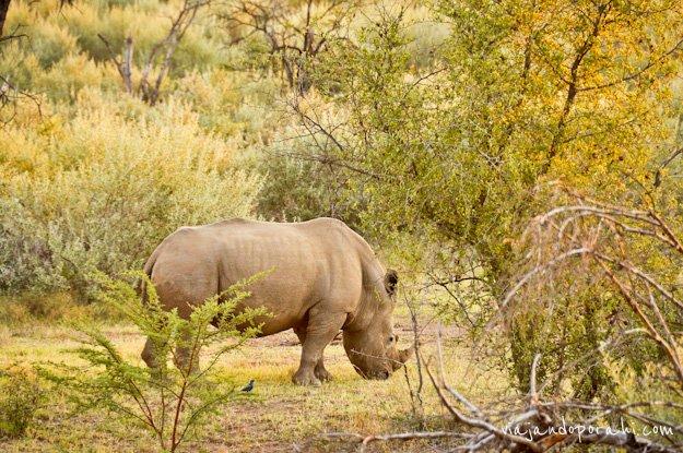 safari-sudafrica-15