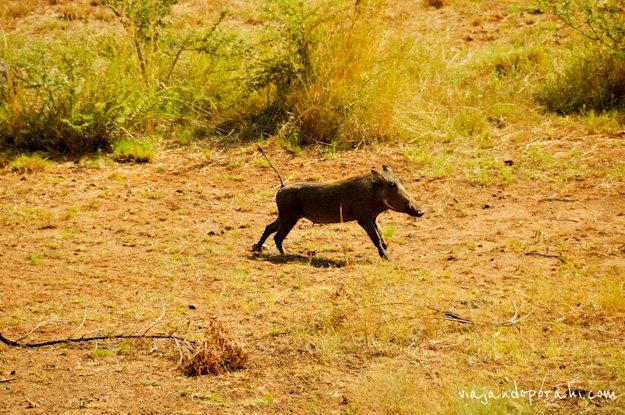 safari-sudafrica-28
