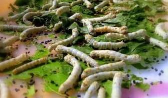 ipek böceği yetiştiriciliği devlet desteği hibe