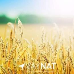 Çiftçi Destekleme Tarım Bakanlığı 2020