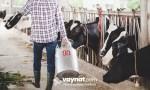 Süt Çiftliği Devlet Desteği 2020
