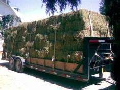 Oster's Premium Hay