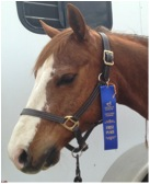 Saint Chic With His First Blue Ribbon