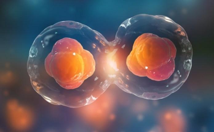 Final Closing des Life Sciences-Fonds Forbion IV bei 360 Mio. EUR