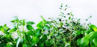 Urban Farming-Lösung bekommt 100 Mio. USD