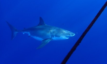 SHARK WEEK, EVERY WEEK | As sightings increase, shark expert says fear is overblown