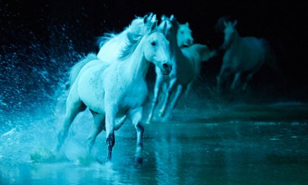 FREE REIN | International horse and acrobat show Cavalia Odysseo comes to Camarillo