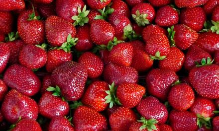STRAWBERRY FIELDS AREN'T FOREVER? | An in depth look at a changing industry