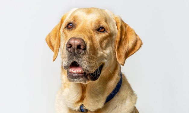KINDNESS CORNER | Therapy dog arrives at CSUCI