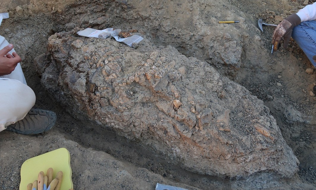 HOW NOW SEA COW | Scientists recently dig into the history of ancient treasures on Santa Rosa Island