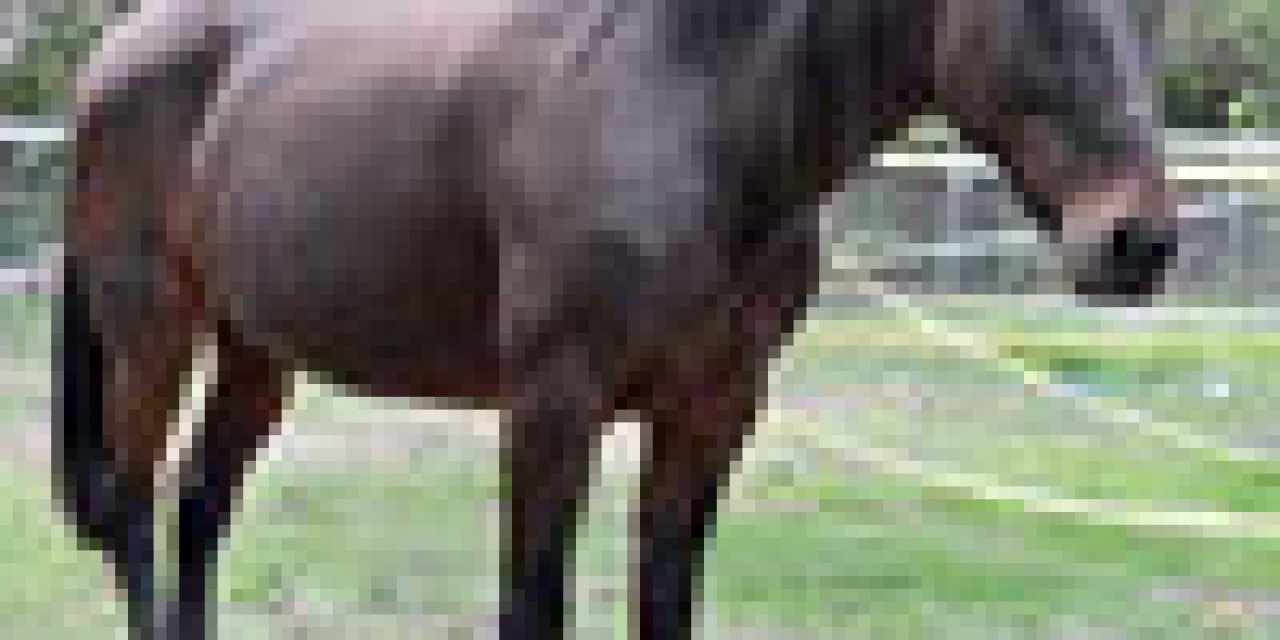 Lawsuit filed over contamination from Ojai horse rescue