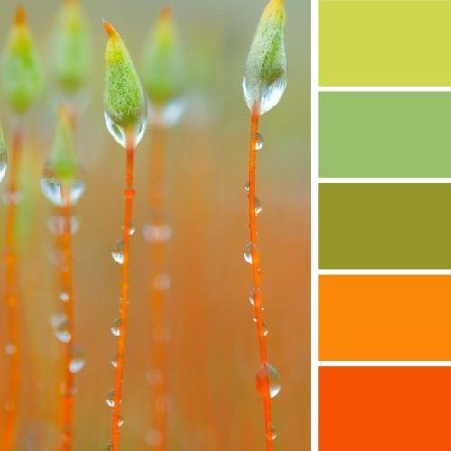 arancione e verde