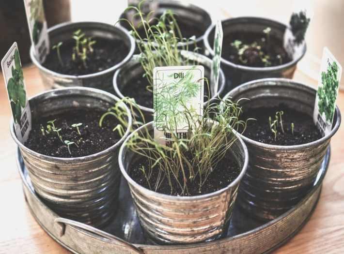 piante per la famiglia