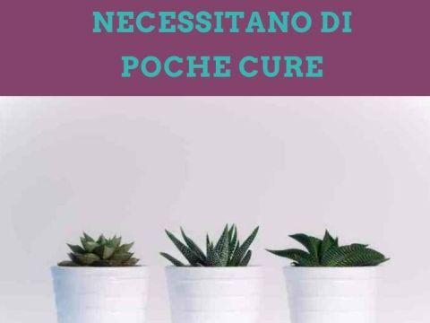 piante da appartamento che hanno bisogno di poche cure