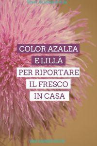 color azalea e lillà copertina