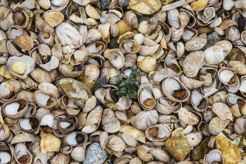 Shellness – a well-named beach area