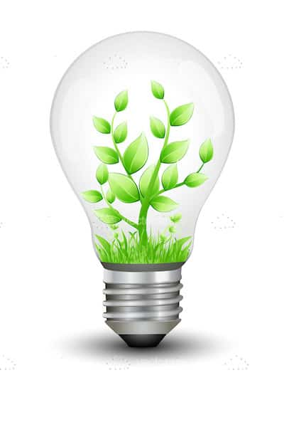 lightbulb with green plant