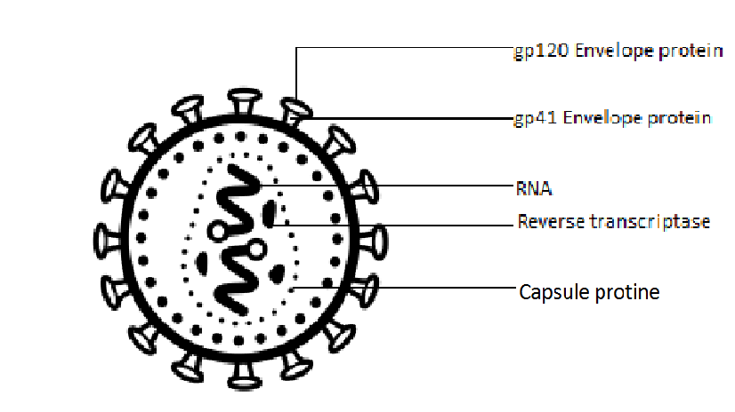 Write the full form of HIV class 12 biology CBSE