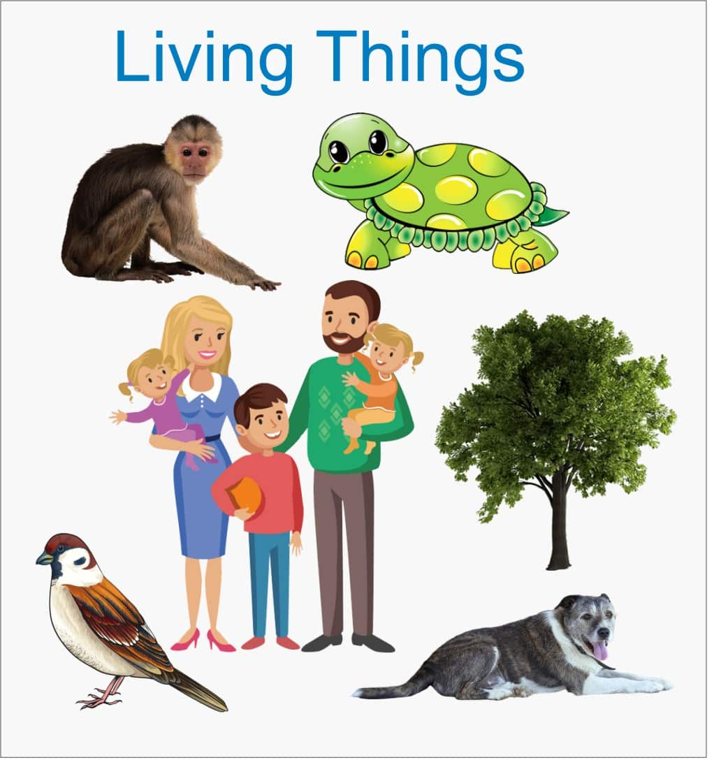 Worksheet On Classification Of Living Things