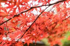 201711_Ibaraki_Tochigi_Gunma_Japan_Travel_By_RentalCar-22