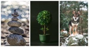 Minerālis, Augs vai Dzīvnieks: Kurš esi Tu?
