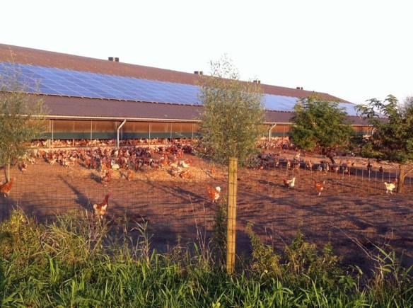 kippenschuur