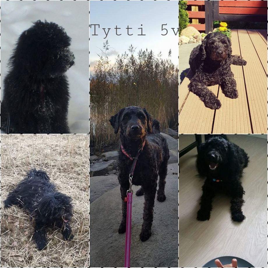 Tytti-koira Stormland