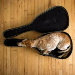Musica: roba da animali!