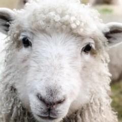 Tu&TU: Perché abbiamo scelto di evitare la lana