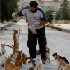 """Il """"gattaro di Aleppo"""" e la tradizione di accoglienza del popolo siriano"""