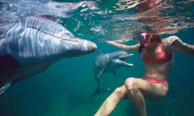 Nado com golfinho em cativeiro. Foto Alamy Stock Photo