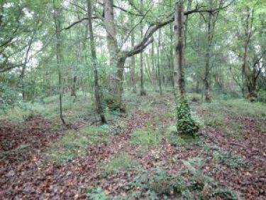 El Bosque del Busgosu
