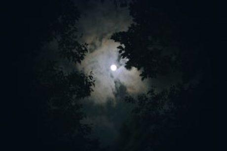 La luna entre los árboles
