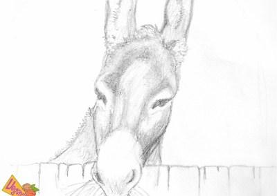 El Burro (dibujo de Raquel)